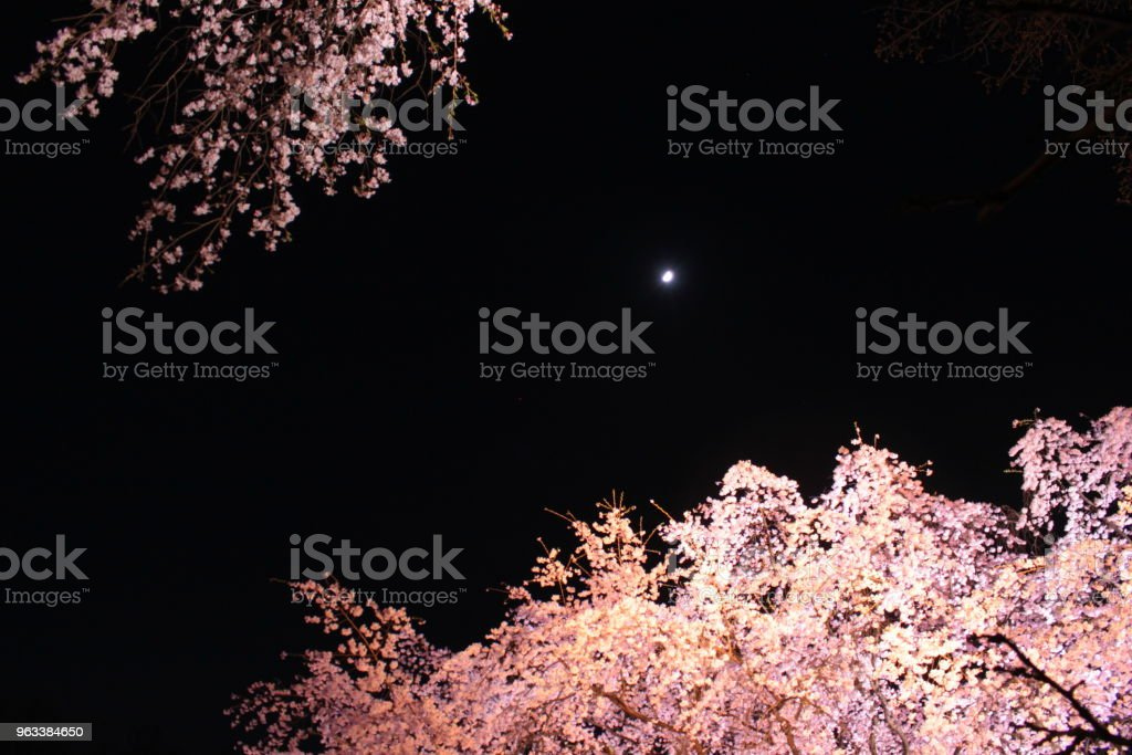 Cherry Blossoms - Royaltyfri Blomma Bildbanksbilder