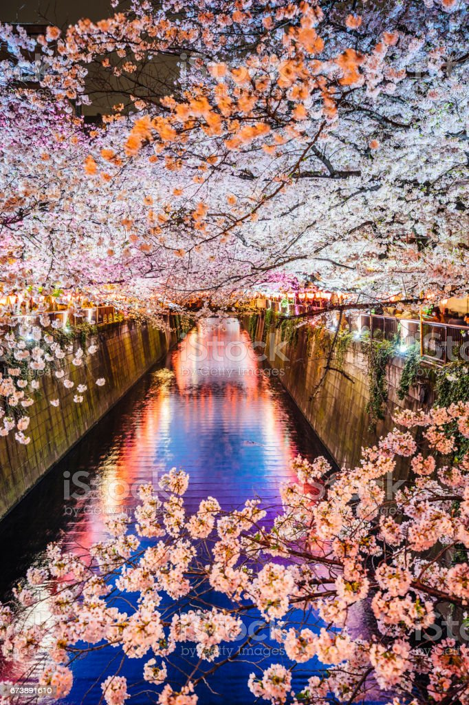 Cherry blossoms season in Tokyo, Japan stock photo