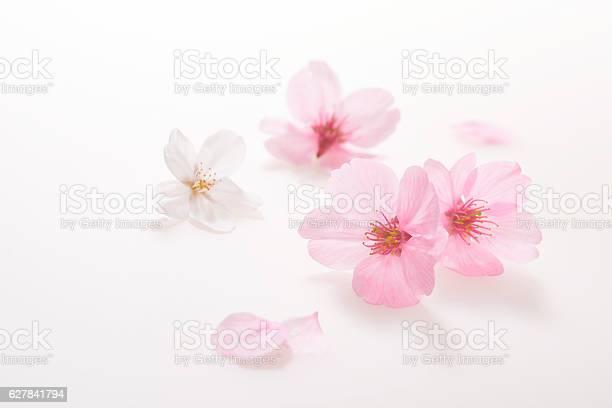 Cherry blossoms spring image picture id627841794?b=1&k=6&m=627841794&s=612x612&h=fvg9ayeuuc cpunmjkhrjulkfotqizhzqqahc kow q=