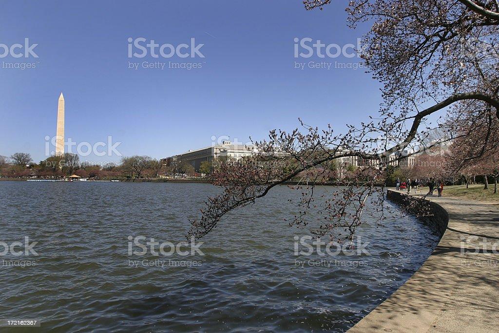 Cherry Blossoms,Tidal Basin, Washington Monument, DC royalty-free stock photo