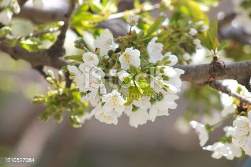 Nature backdrop. Spring flowers. Springtime.