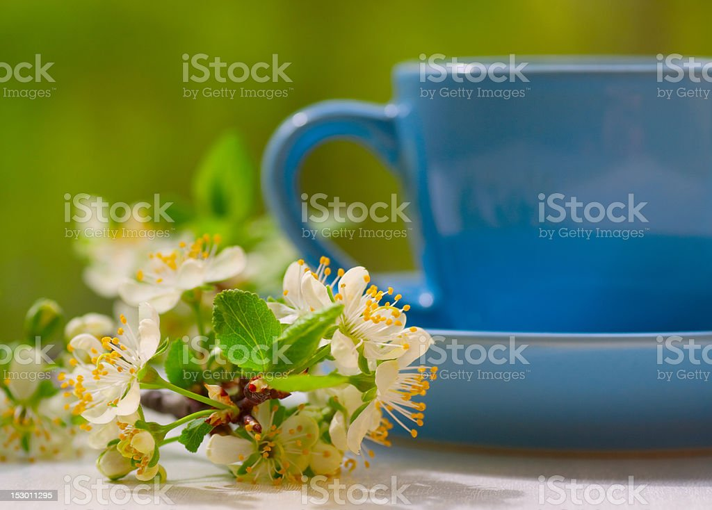 Cherry flowers and blue cup royalty-free stock photo