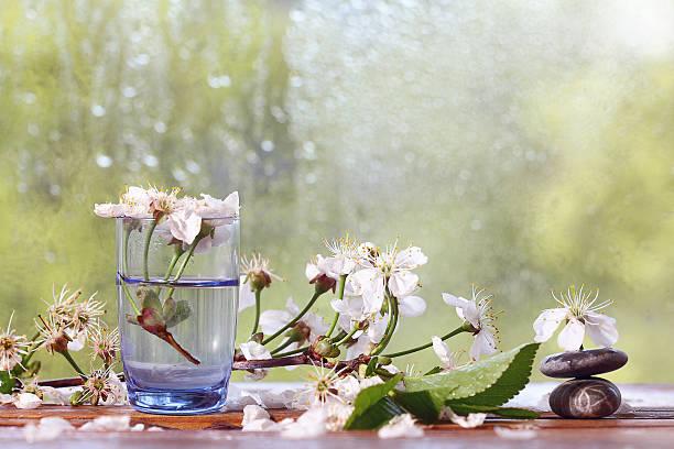 Flores de cerezo y ramas fondo verde exuberante follaje tipo lluvia - foto de stock