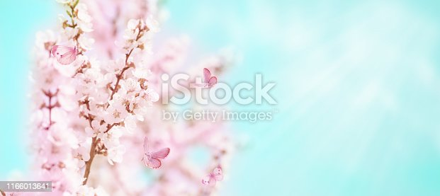 istock Cherry flowers and butterflies 1166013641