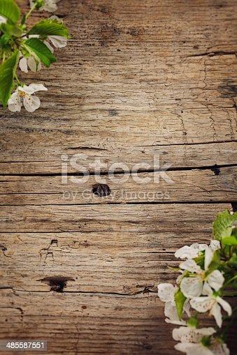istock Cherry flowers 485587551