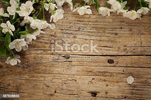 istock Cherry flowers 487648845