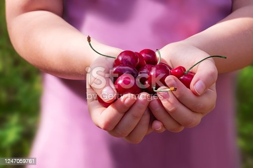 A small girl holding a heap of bright cherry berries with peduncles  on a blurred foliage background on a sunny day.  Harvest concept.