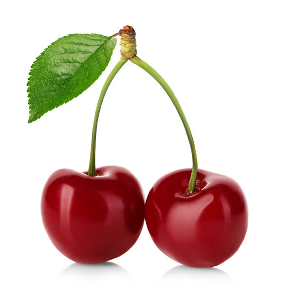 Cherry isolated. Cherries with leaf. Cherry with leaves isolated on white background. stock photo