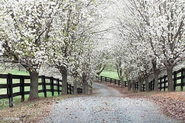 Photo of Cherry Lane Path