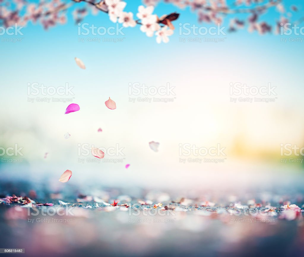 Cherry Petals Falling From The Tree stock photo