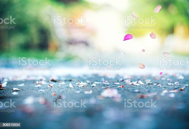 Cherry petals falling to the ground picture id506315534?b=1&k=6&m=506315534&s=612x612&h=tbbsufs6cgaw9vvejnungl40jedjpaymygtc8xhssa8=