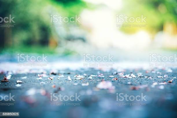 Cherry petals on footpath through the park picture id535850525?b=1&k=6&m=535850525&s=612x612&h=emwyzgoaewmjm9lxbjnpxzrnlbtb zmtxzowps3jhl8=