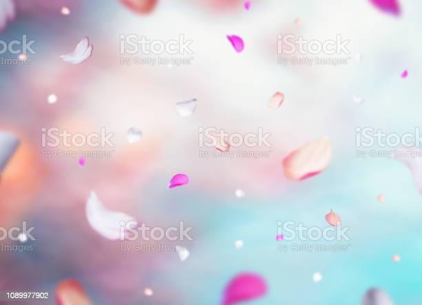 Cherry petals picture id1089977902?b=1&k=6&m=1089977902&s=612x612&h=ndd6kr19qlr8lvuptqwzzez1kxhsnzg 4vn q7fqxu4=