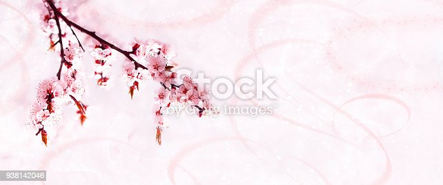 istock Cherry pink blossoms close up. Blooming sakura cherry tree. Copy space  Panoramic format 938142046