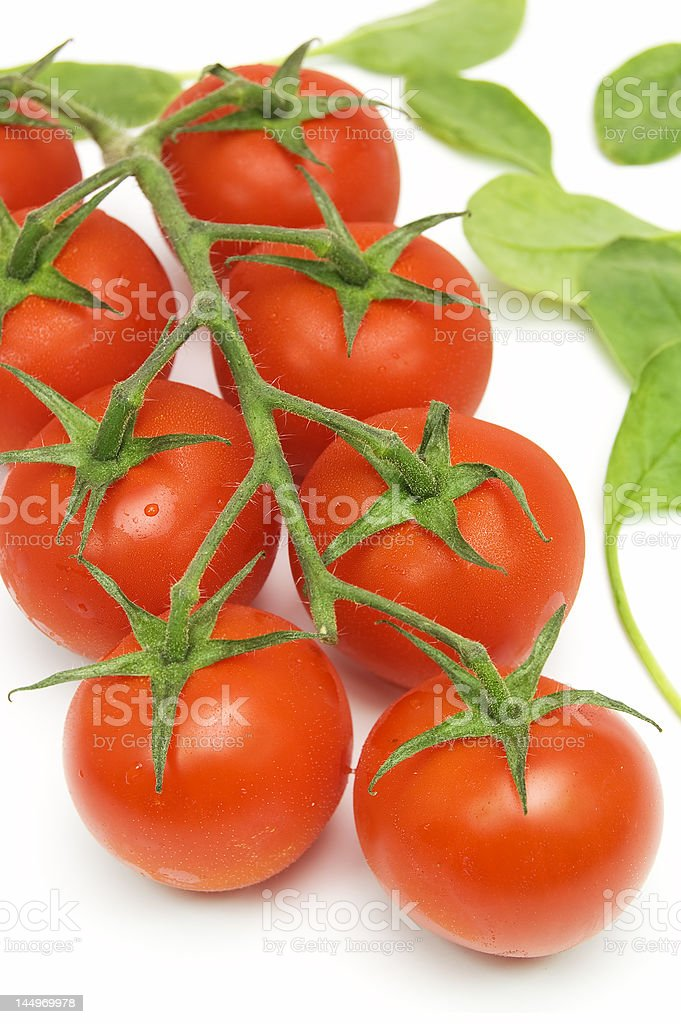 cherry tomatoes on vine royalty-free stock photo