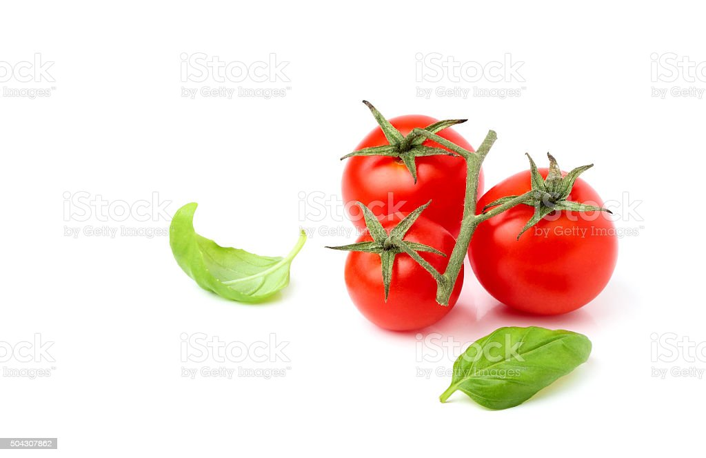 Cherry tomatoes with Basil leaves. stock photo