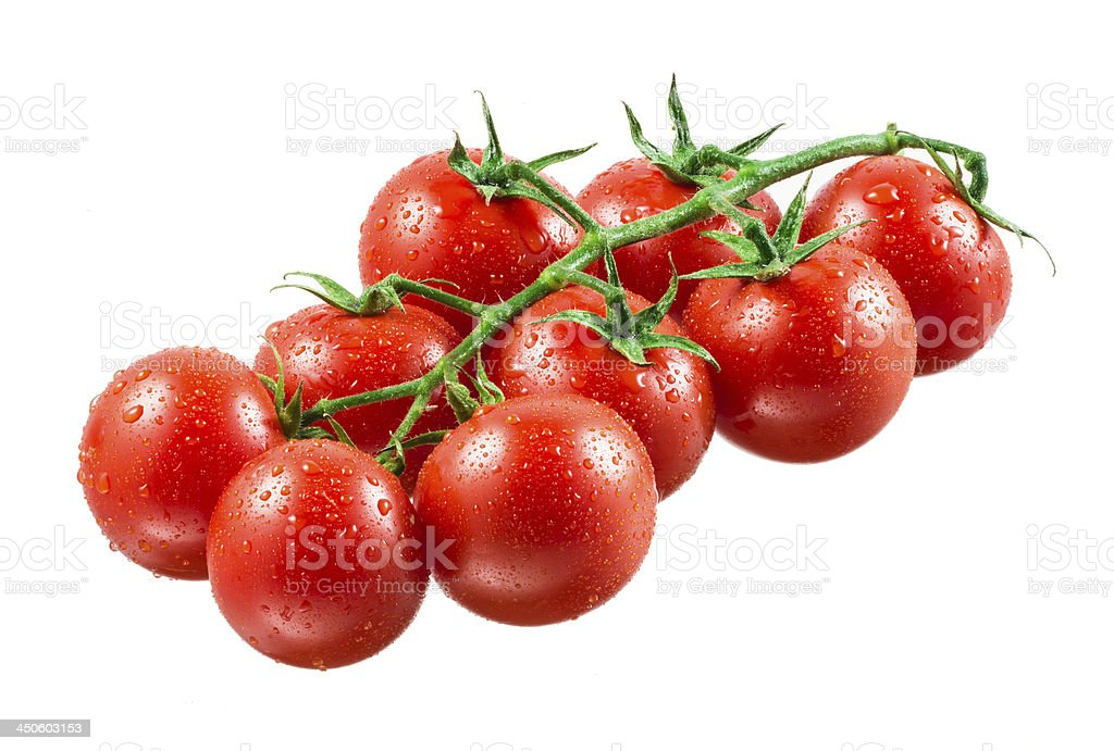 Cherry tomatoes with drops on branch. stock photo
