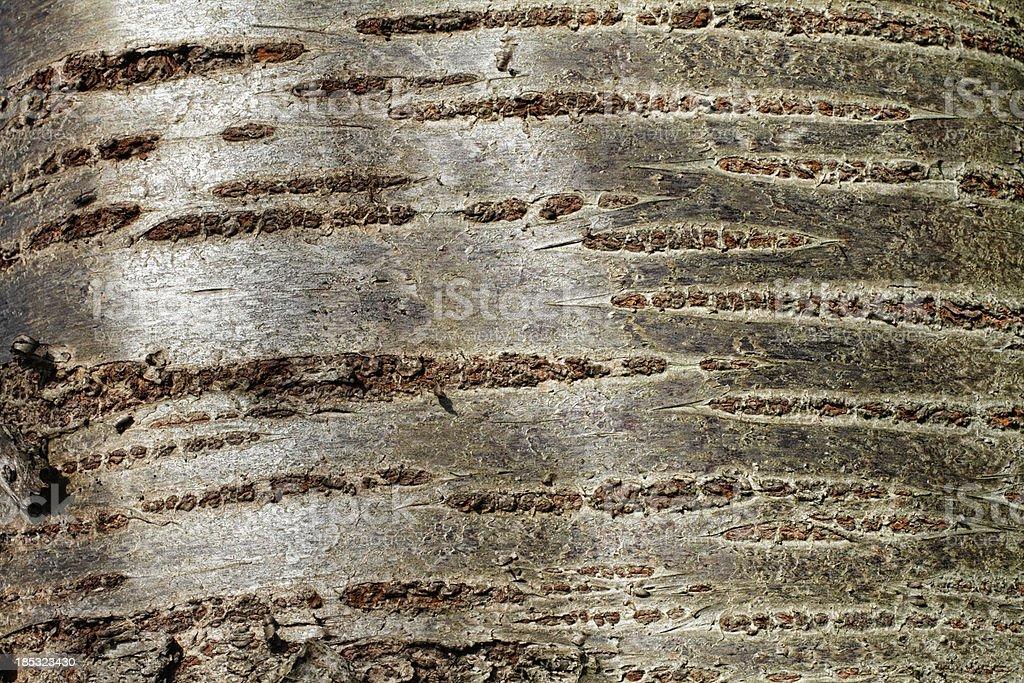 Cherry tree bark Prunus textured grey background stock photo
