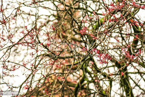 1135260918 istock photo Cherry tree blossoms. Blooming spring flowers in Paris. 941328698