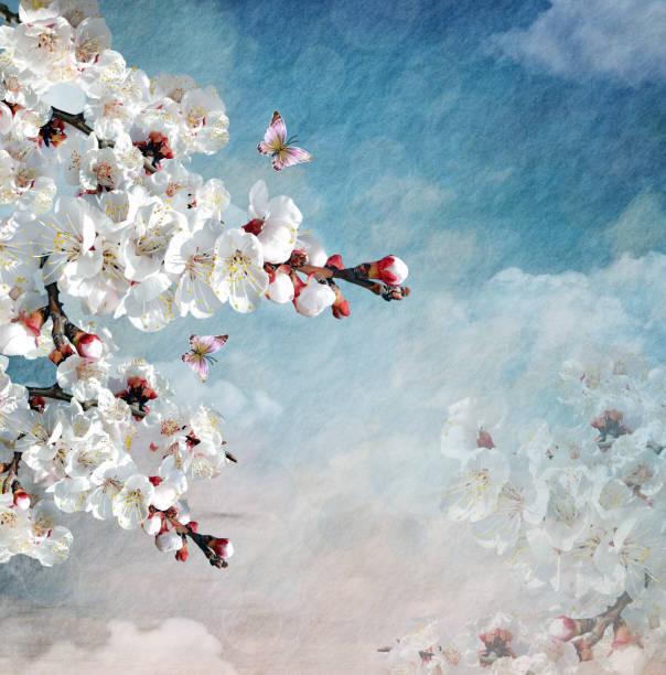 Cherry tree branch in a cloudy sky landscape picture id1149586889?b=1&k=6&m=1149586889&s=612x612&w=0&h=mzdcjq9uj u 2klwjlgcjxdbxukmyjhtqn7efjwanzq=