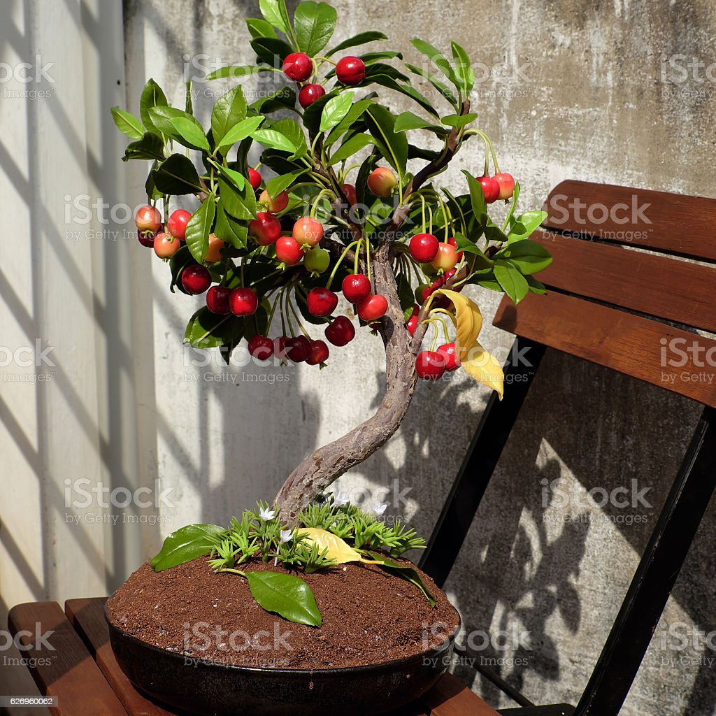 Cherry tree from clay, handmade bonsai stock photo