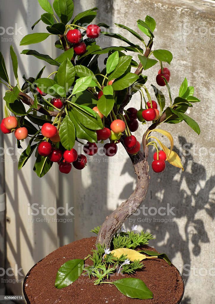 Cherry Tree From Clay Handmade Bonsai Stock Photo Download Image Now Istock