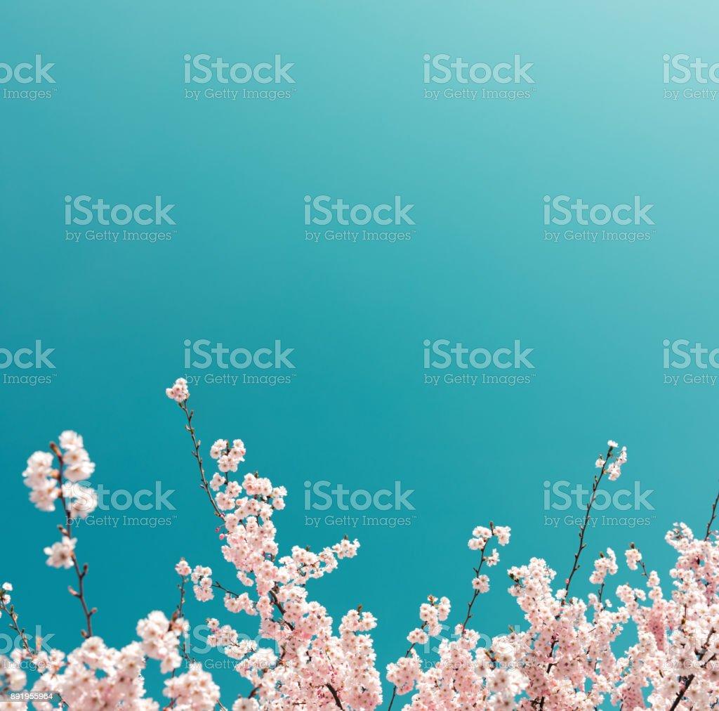 Kersenboom In het voorjaar - Royalty-free Achtergrond - Thema Stockfoto