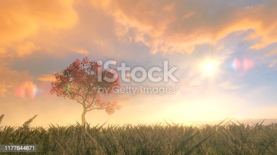Cherry tree on the field