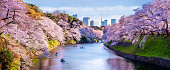 4 march 2019 - Tokyo, Japan: Cherry trees in full bloom at Chidorigafuchi Park with recreational boats in Tokyo