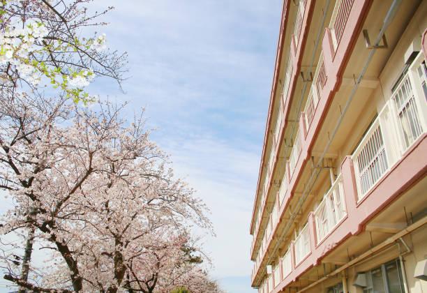 Kirschbäume in voller Blüte und rosa Gebäude – Foto