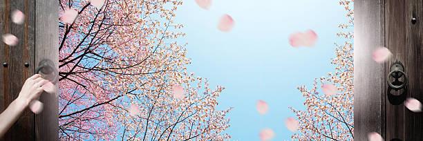 cherry blossoms - trennungssprüche stock-fotos und bilder
