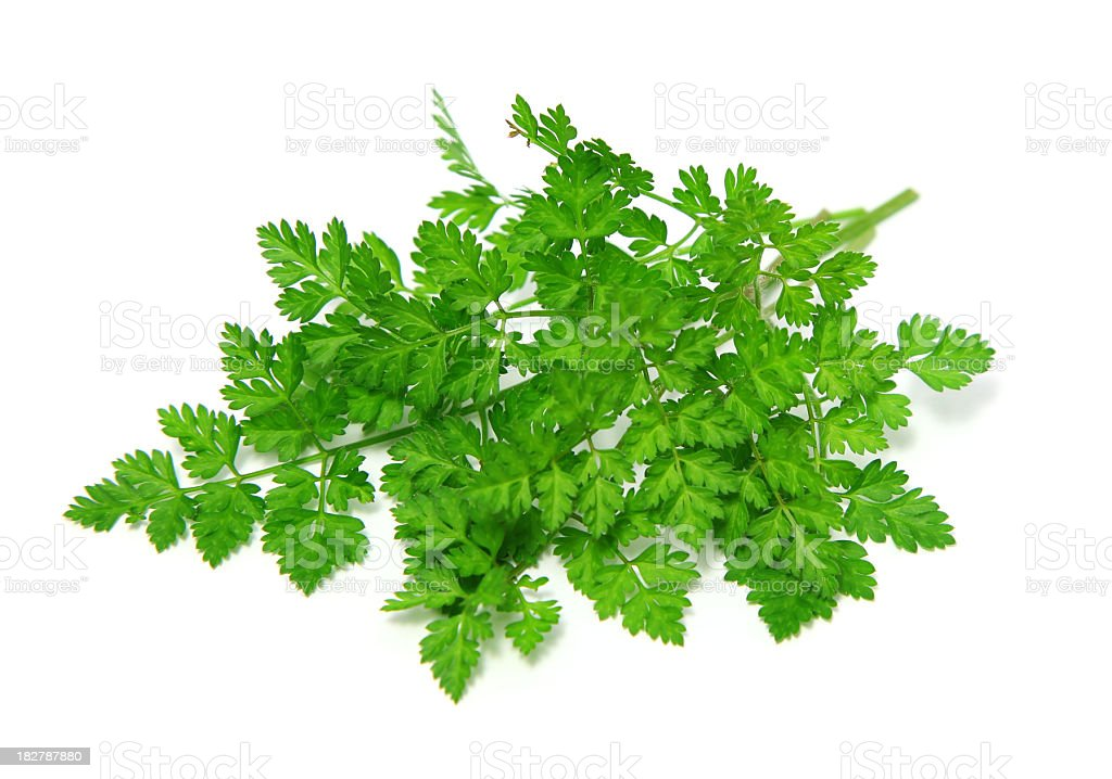 Chervil herbs on white background stock photo