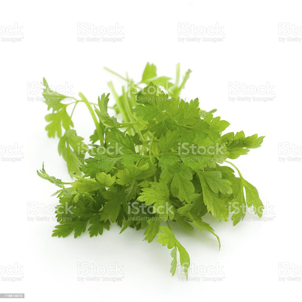chervil royalty-free stock photo