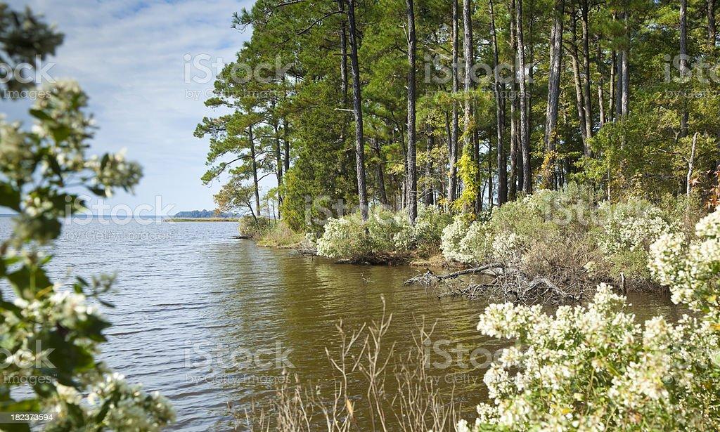 Chesapeake Bay Blackwater stock photo