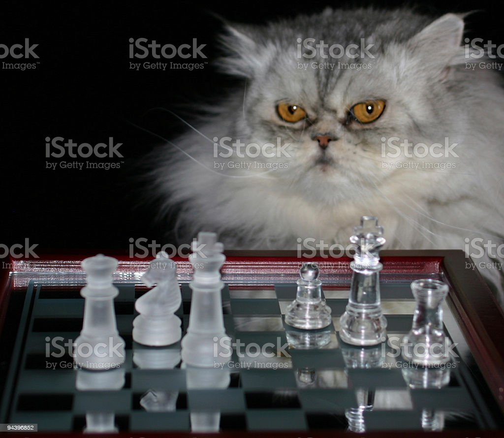 Chess champion royalty-free stock photo