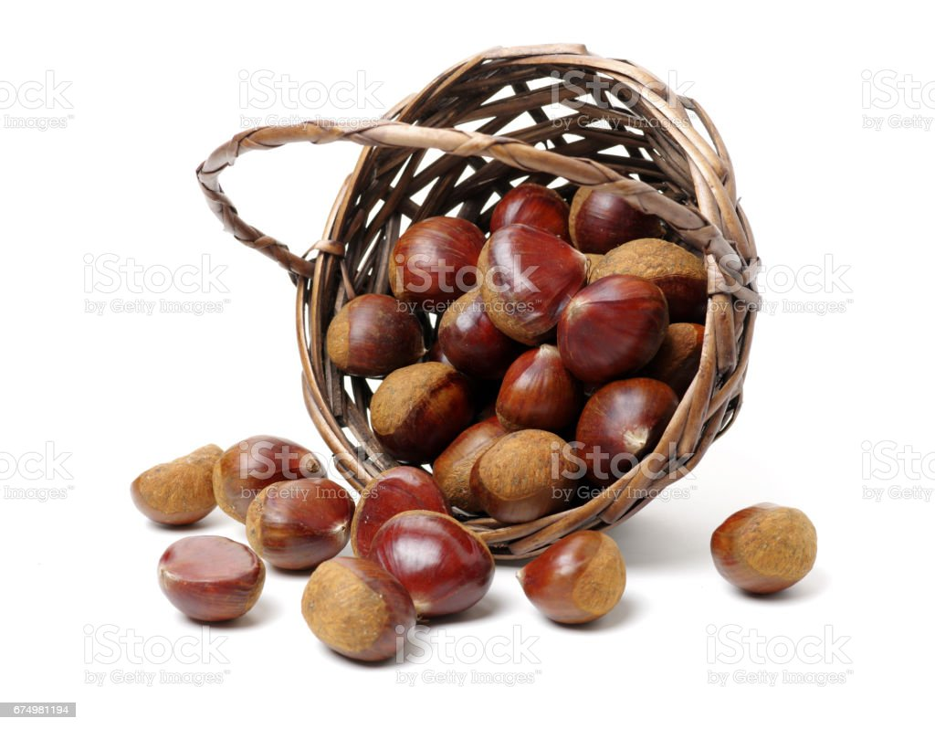 Chess nuts  on white background stock photo