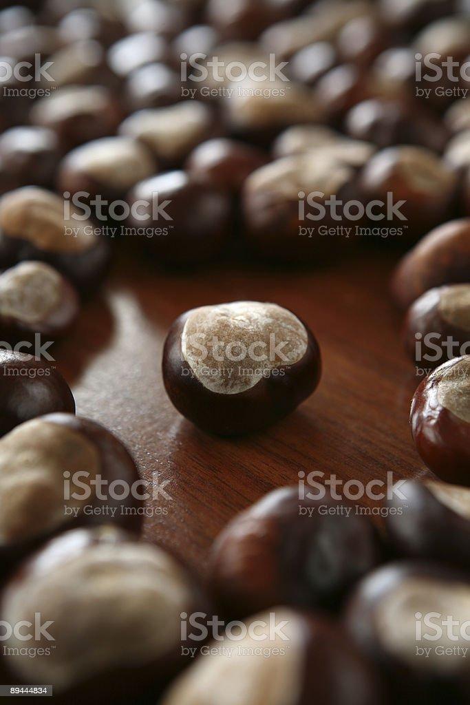 chestnut 2 royalty-free stock photo
