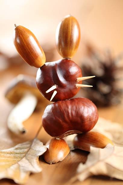 chestnut bunny - kastanientiere stock-fotos und bilder