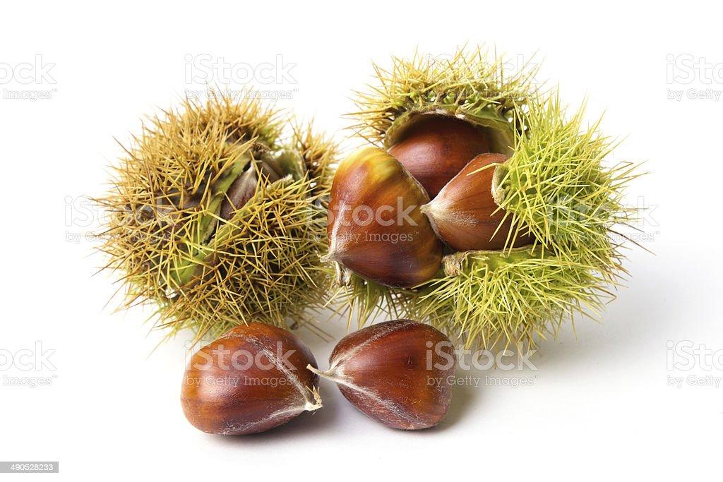 Chestnut close-up stock photo