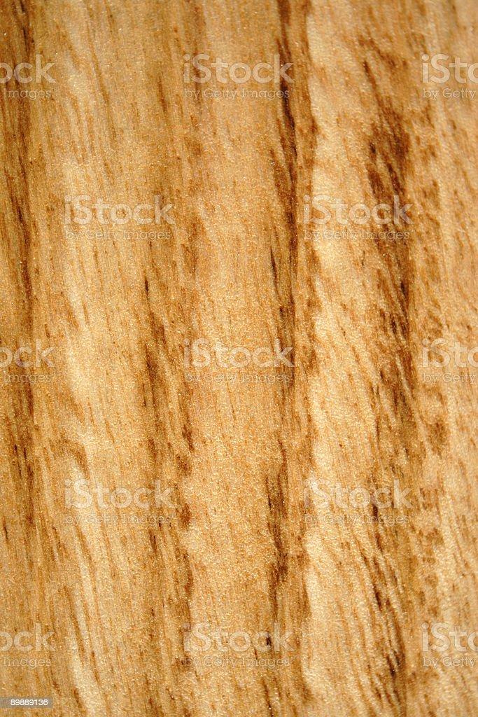 Chestnut close-up royalty-free stock photo