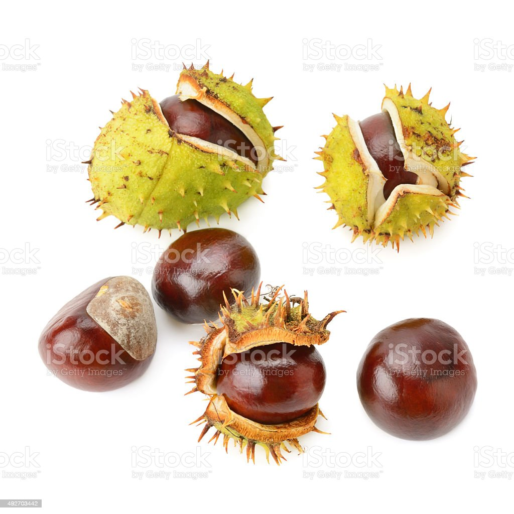 Chestnut fruits stock photo