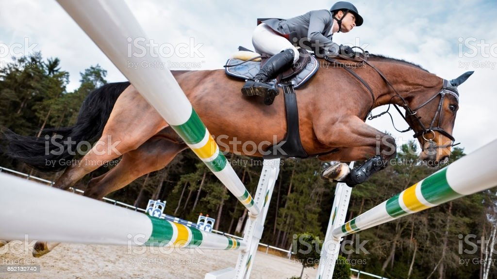 Chestnut Horse And His Rider Jumping An Oxer Stock Photo Download Image Now Istock