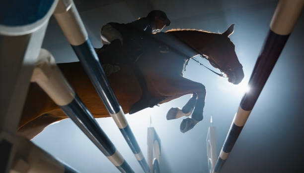 Chestnut horse and it's rider jumping over rail Chestnut horse and female rider jumping over rail in night. working animal stock pictures, royalty-free photos & images