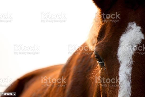 Chestnut horse eye close up picture id498655370?b=1&k=6&m=498655370&s=612x612&h=g01s9truqduzh8luekncpcgumywovjfzapv1oiotemy=