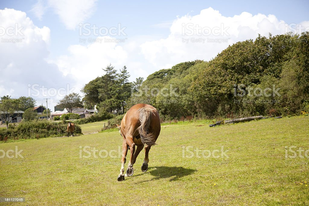 chestnut horse in paddock royalty-free stock photo