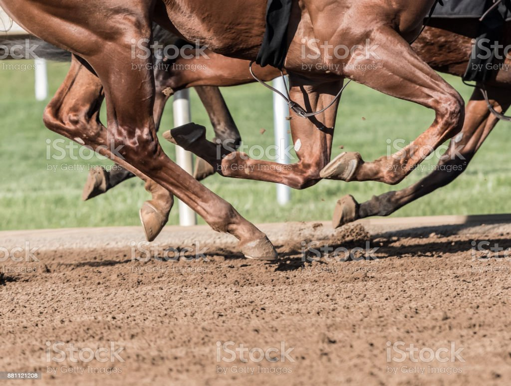 Chestnut Horse Legs Pound the Dirt stock photo