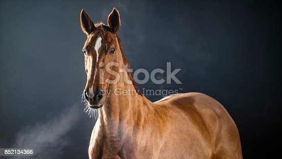 Chestnut horse standing, observing surroundings and walking.