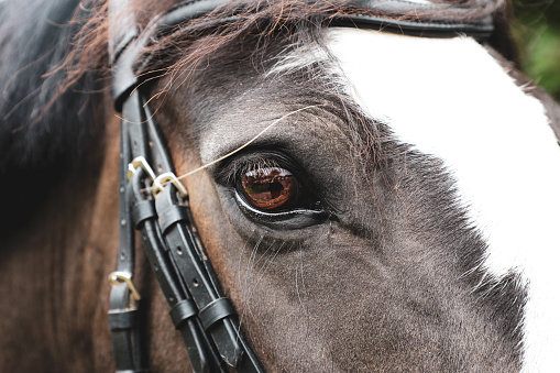 The eye of a chestnut horse