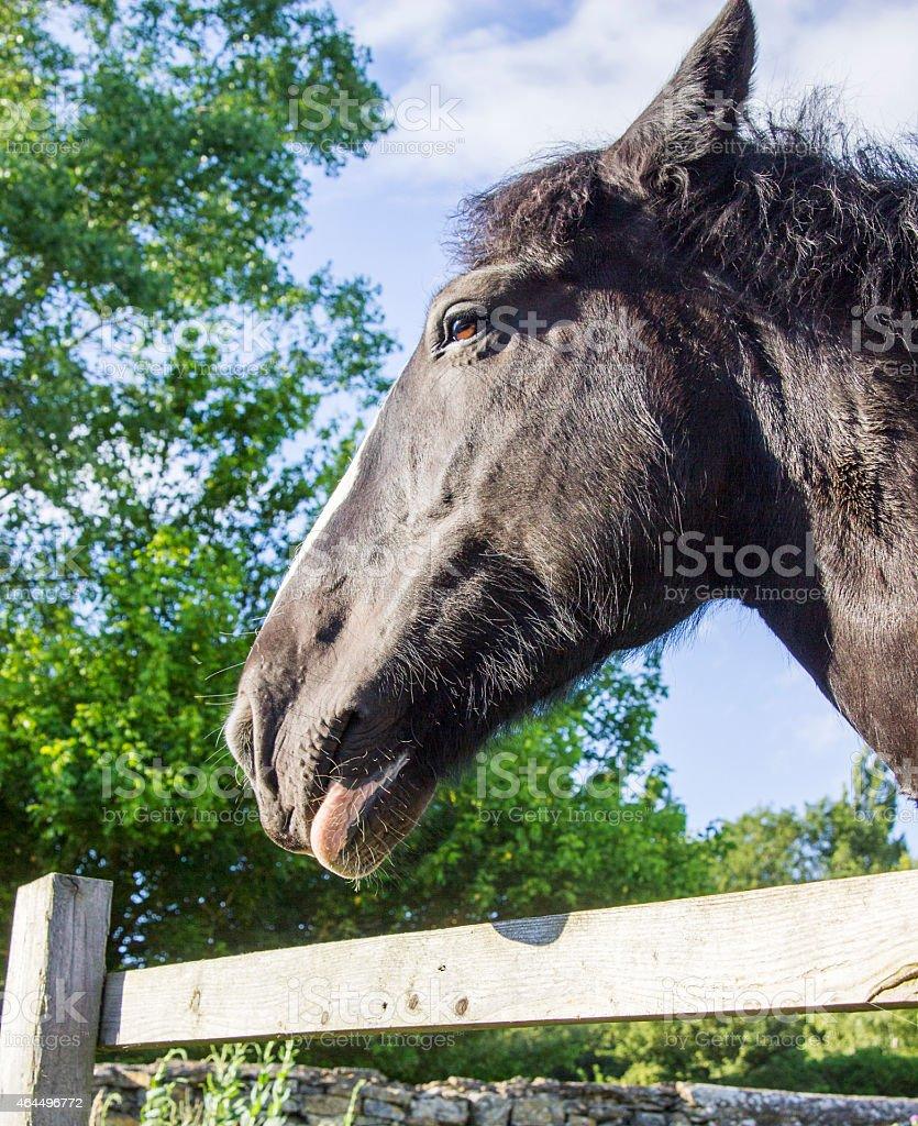 Chestnut Horse Pony Midshot stock photo