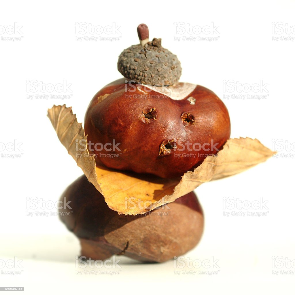 chestnut man three stock photo